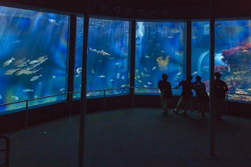 下田海中水族館4 (640x427) (500x334)