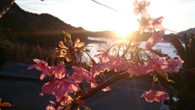 H280218夕陽と桜3