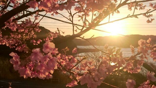H280218夕陽と桜1