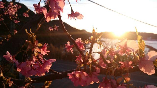 H280218夕陽と桜2